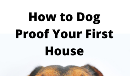 Dog Proofing Your First Home