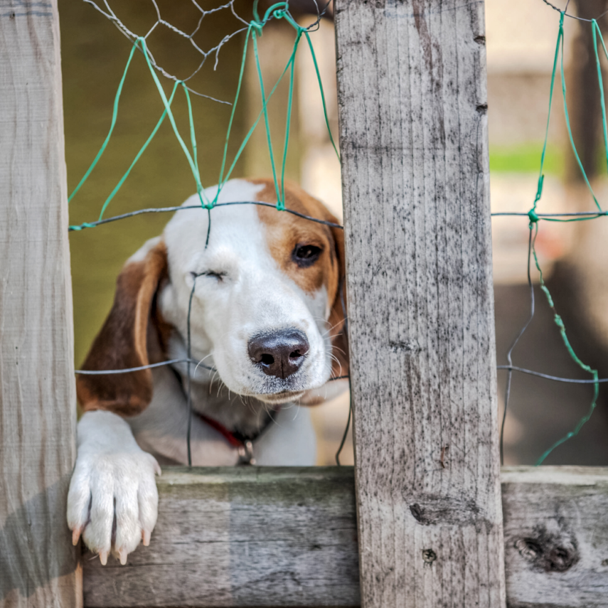 Proofing Your Home for Your Dog