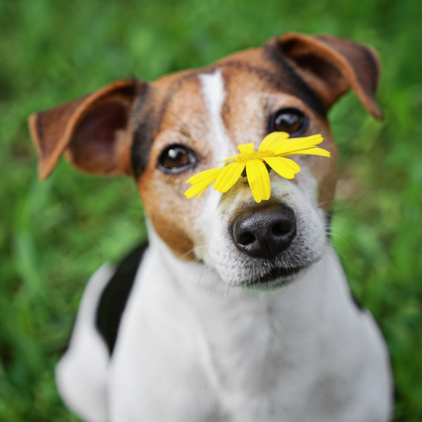 Place Mulch on Grass for Dog Spots