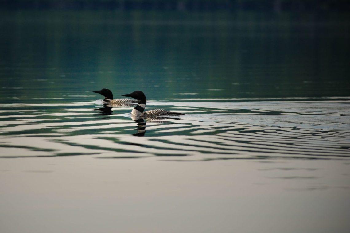 NOCO Best Lake Properties