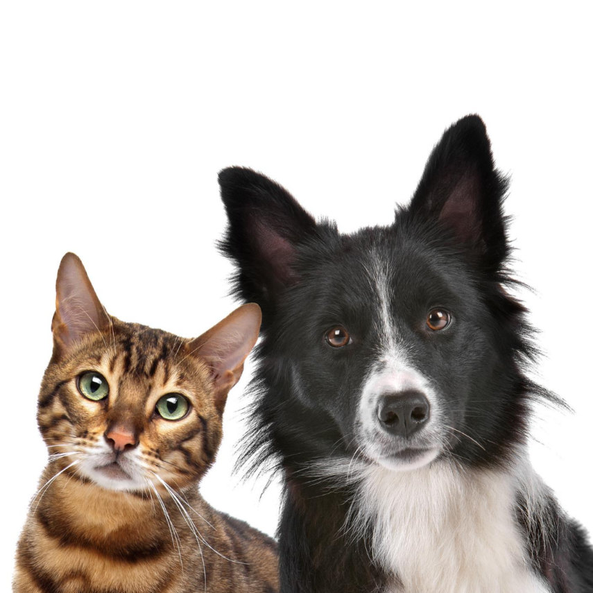 Don't Forget to Register Your Pets when You move