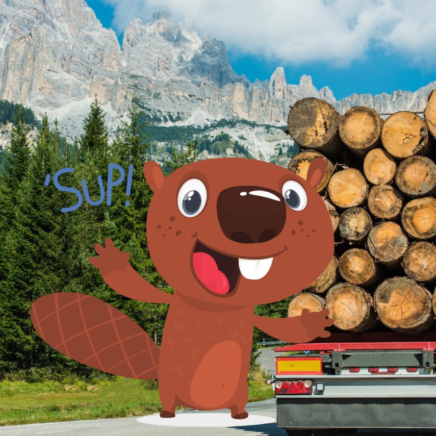 Lumber shortage in Northern Colorado