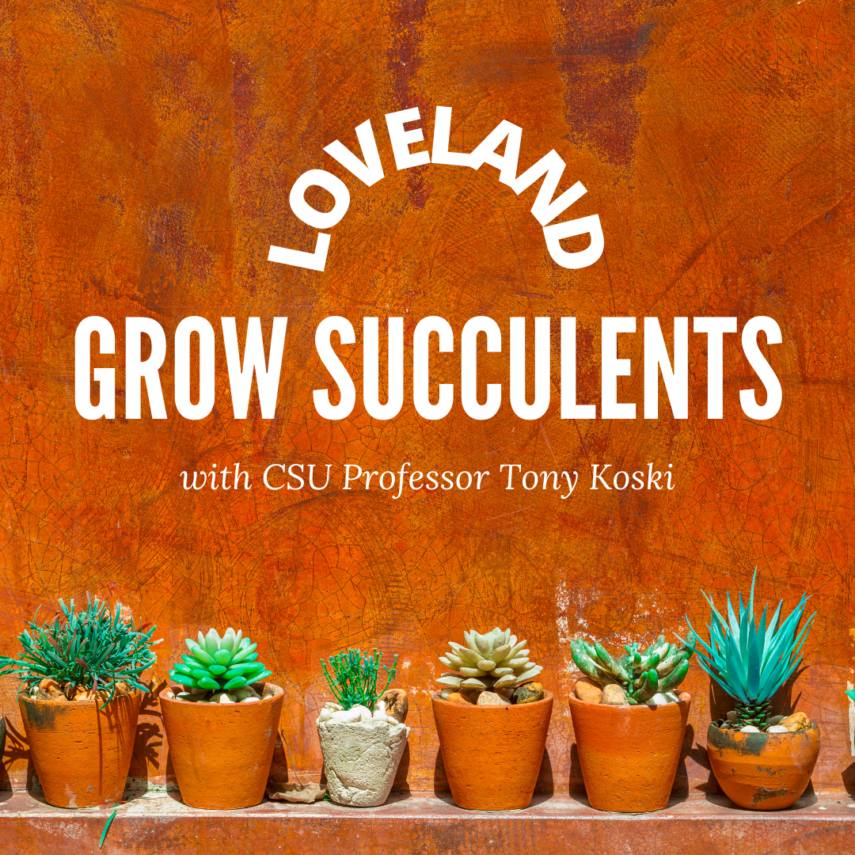 Learn to grow succulents with Tony Koski from CSU